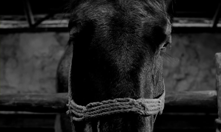 0Turin-Horse